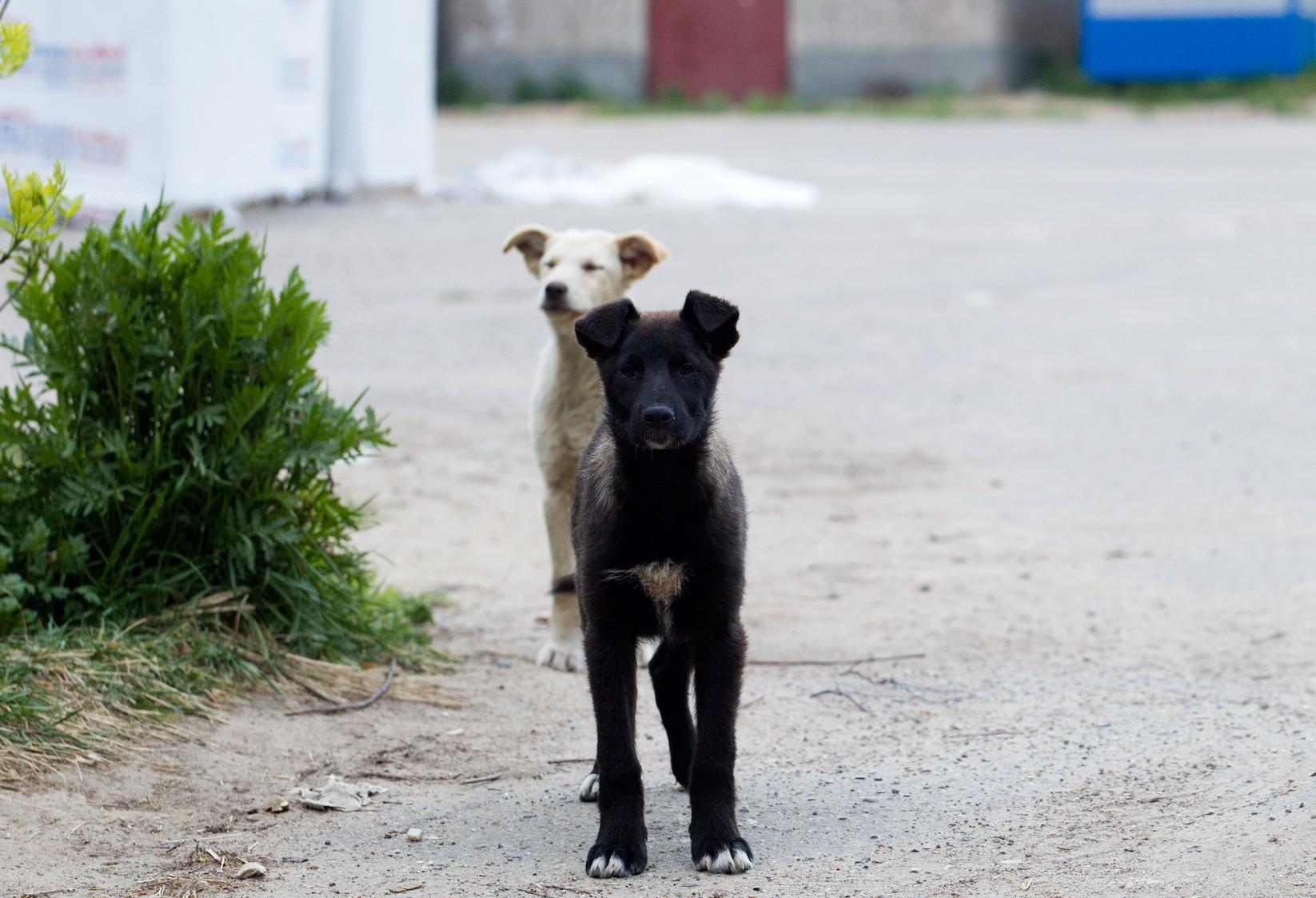 Ministero della Salute: caccia ai killer di cani